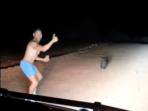 Wombat stoned to death by laughing police officer