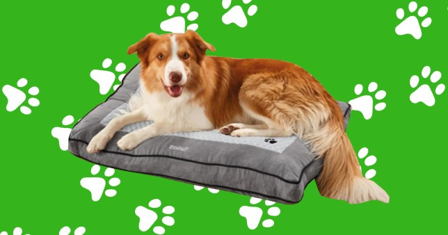 lidl selling heated dog bed