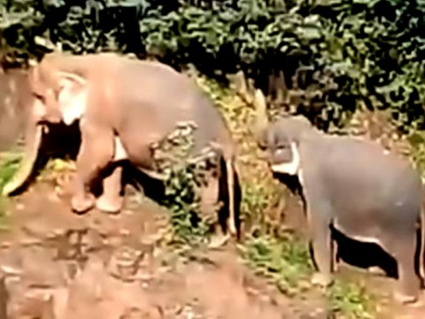 Five elephants die trying to save calf drowning in waterfall