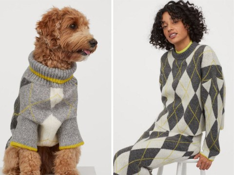 Resultado de imagen para H&M launches sweaters for dogs
