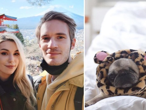 Marzia Kjellberg rests up with adorable dog Maya after gruesome injury on holiday with PewDiePie