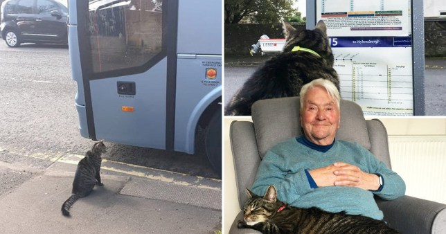 Meet George the cat, who loves to travel alone on buses and trains