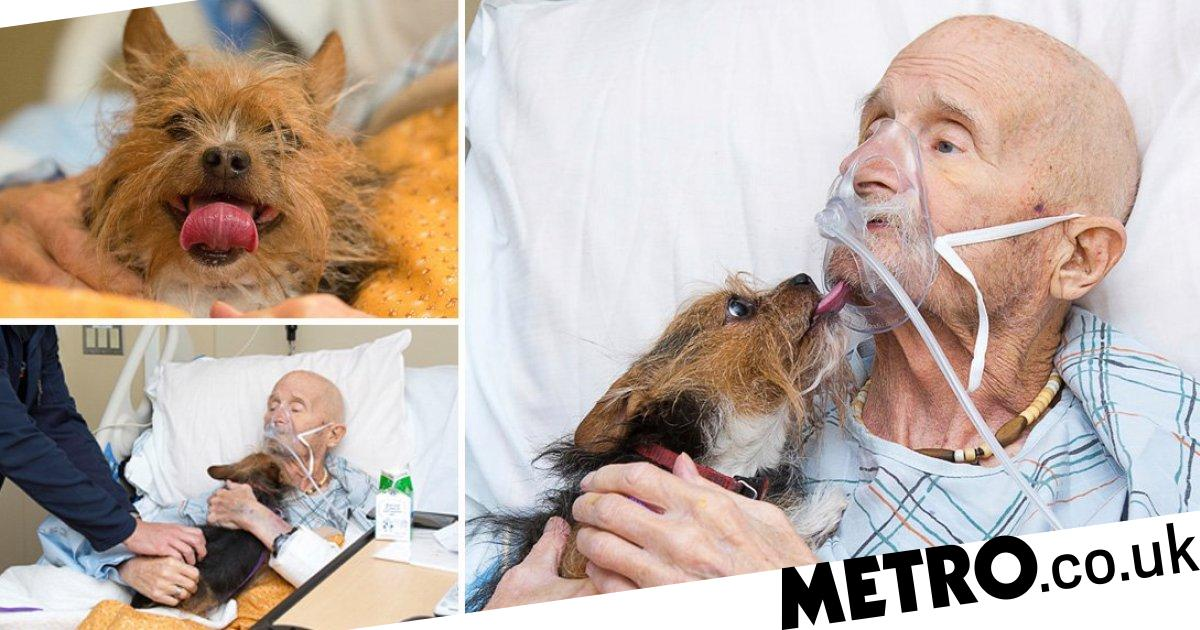 Dying veteran's final wish to see his puppy is granted in emotional reunion
