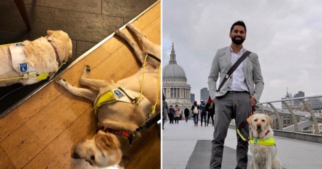 Two guide dogs and picture of disability advocate Dr Amit Patel and his guide dog Kiki
