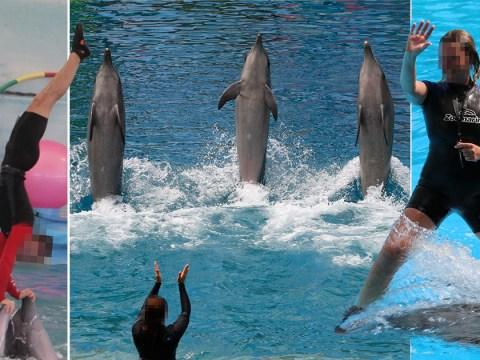 Expedia 'cashing in on cruelty to thousands of dolphins in captivity'