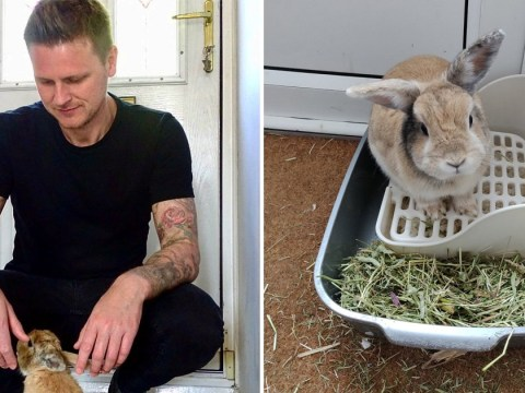 Man rescues abandoned bunny and they become the best of friends