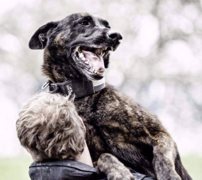 Police dog Dutch has a number of achievements to his name but is retiring from North Yorkshire Police
