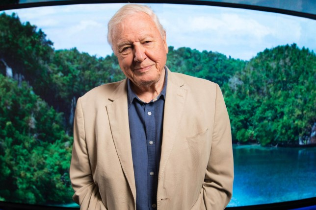 EDITORIAL USE ONLY Sir David Attenborough attends the world premiere of 'Seven Worlds, One Planet', the latest landmark series from BBC Studios Natural History Unit, Leicester Square, London. PRESS ASSOCIATION Photo. Picture date: Monday October 7, 2019. The series follows in the wake of Blue Planet II, Planet Earth II and Dynasties and sees Sir David Attenborough return to narrate the series, which tells the story of our seven spectacular continents and how they shape the extraordinary animal behaviour and biodiversity we see today. Photo credit should read: David Parry/PA Wire