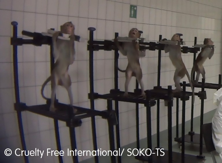 Pic Shows: The monkeys being kept for experiments in metal harnesses; This shocking footage shows the harrowing treatment of monkeys and dogs at a German lab which uses animals for experiments.