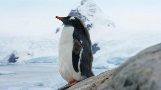 Seven Worlds, One Planet - Antarctica