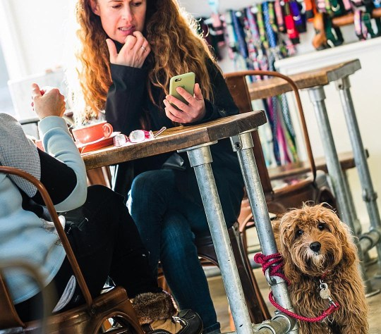 A woman sat at a table in Paws for Coffee with her dog and pooch is looking into the camera