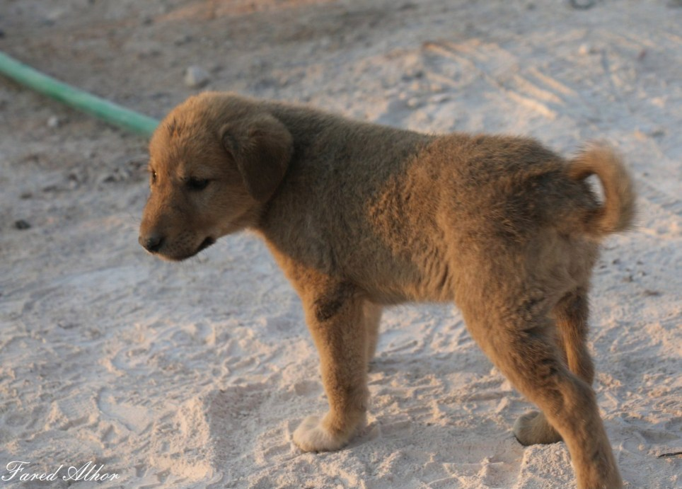Puppy rescued from rubble of Isis leader's lair destroyed in US raid