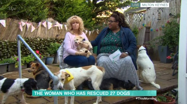 Woman rescues 27 paralysed dogs including Elton John who is 'still standing'