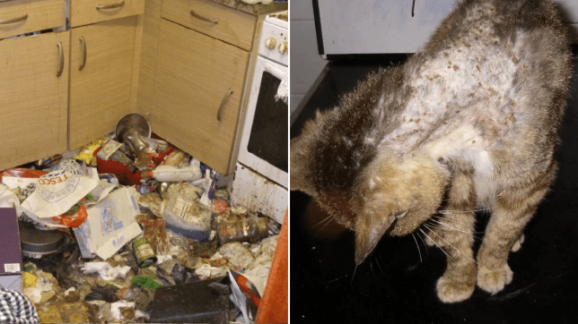 Horrifying pictures reveal the conditions pets were kept in by owner