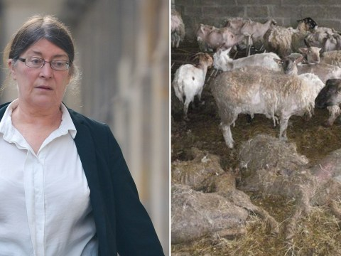 Owner of farm branded 'total animal welfare disaster' is jailed