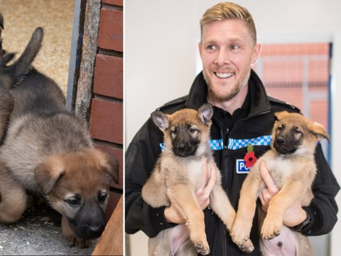 Police force welcomes nine incredibly cute new recruits