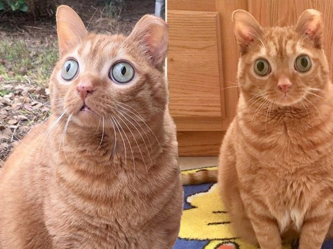 Potato the cat is known for his huge eyes on social media