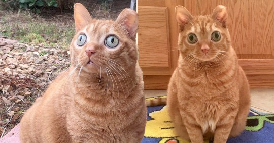 Cat with huge bulging eyes