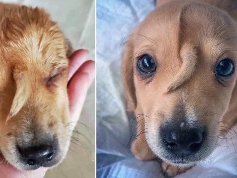 'Unicorn puppy' with tail growing out of his head is rescued from the street