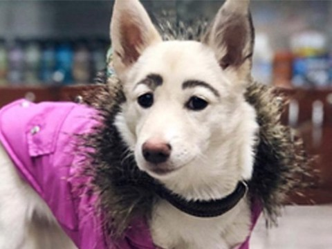 This Russian dog is going viral for its quirky REAL eyebrows
