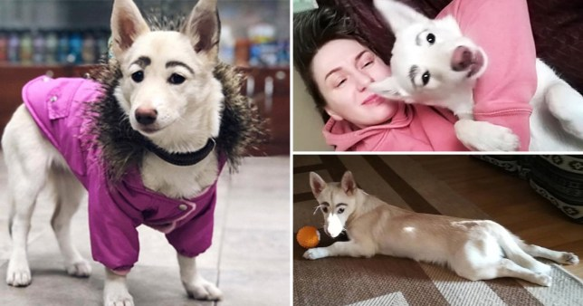 Stray dog with eyebrows