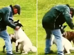 Man filmed repeatedly punching his dog while walking in park is jailed