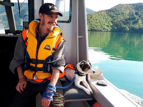 Dog rescued from remote island after it got spooked by a sealion and ran off