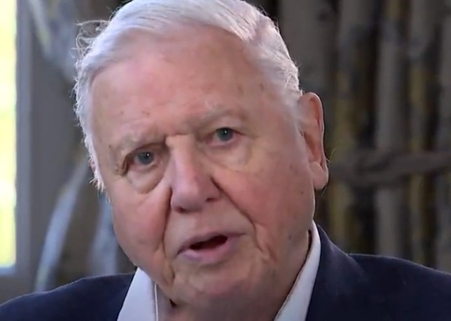 david attenborough says it's too late to reverse climate change Picture: Channel 4 METROGRAB