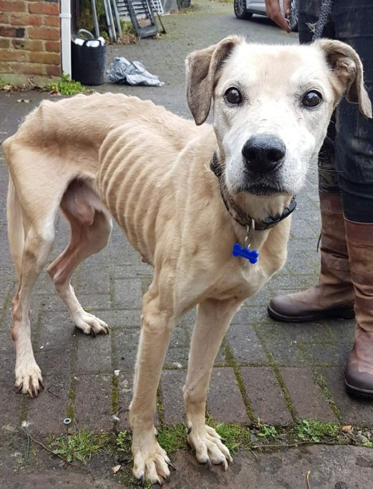 Starving dog who saw worst of humanity thrown over gate Picture: @SOSmoggies METROGRAB