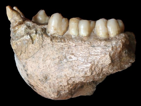 Two-million-year-old tooth genetically links giant ape to modern orangutan