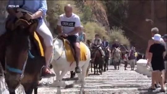 Abuse of donkeys still happening in Santorini