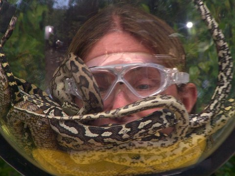 I'm A Celebrity: Caitlyn Jenner faces a snakepit and it's not the Kardashians in hardest Bushtucker trial yet