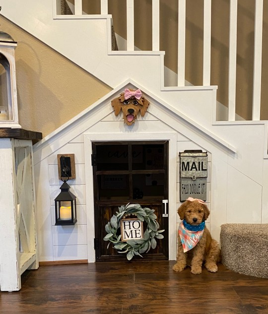 Jersey the goldendoodle in front of her house under the stairs