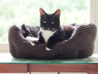 """RSPCA's loneliest cat facing second Christmas without home The RSPCA's loneliest cat is facing a second Christmas in the charity's care. Toby, a black and white cat, was signed over last Christmas Eve and has now spent 332 days with them. The average time a cat waits for a home is 28 days. Toby, who is 11, spent his life in a household of 46 cats, with 15 of them taken in by the charity's Canterbury branch last Christmas. All but Toby have now found their forever home. Beth Hixson, from the branch, said: """"Toby's former housemates were rehomed quite quickly, but poor Toby didn't cope well with being in the cattery so hid away and wouldn't come out to see people when they came to choose a cat. """"We found a foster home for Toby where he has proven to be a sociable, friendly and interactive cat."""