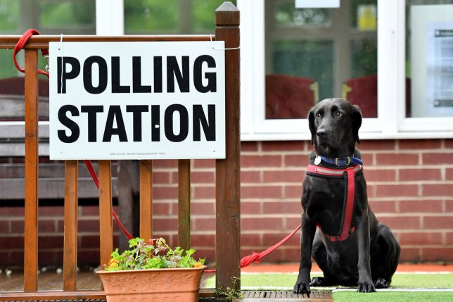 a polling station with a dog waiting next to it