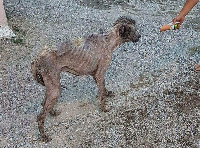 Dramatic transformation of skeletal dog locals thought was a 'monster' to 'fluffy giant'