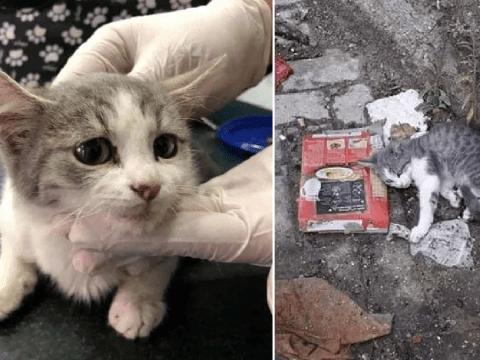 Kitten dies after owner breaks its pelvis and dumps it in rubbish