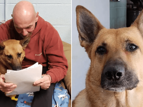 Police dog is still at the pound after two years because no one wants her