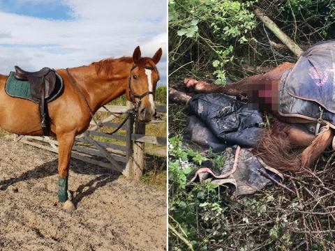 Horse dies month after he got impaled on fence when fireworks spooked him