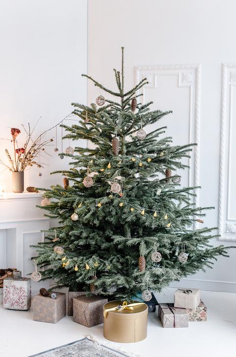 How long does a Christmas tree take to grow?   Metro News