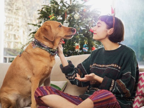 Can dogs eat sprouts, Christmas pudding, turkey, gravy, mince pies or other festive food?