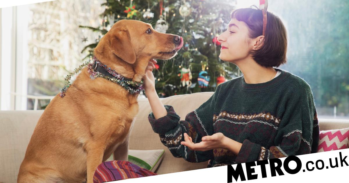 Can dogs eat Christmas pudding or sprouts? 9 Christmas foods not to feed them