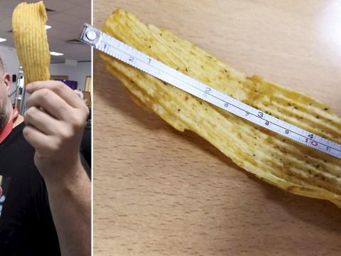 Could this be Britain's biggest crisp?