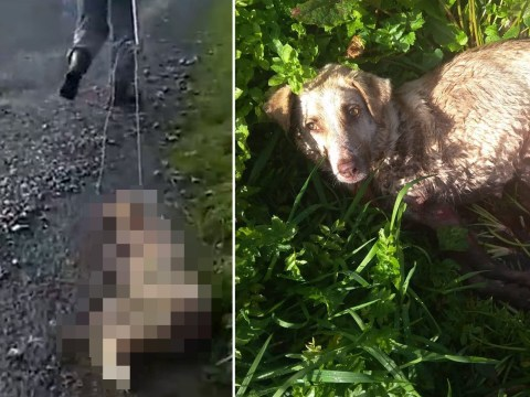Dog survives after owner shot and dragged her by a rope