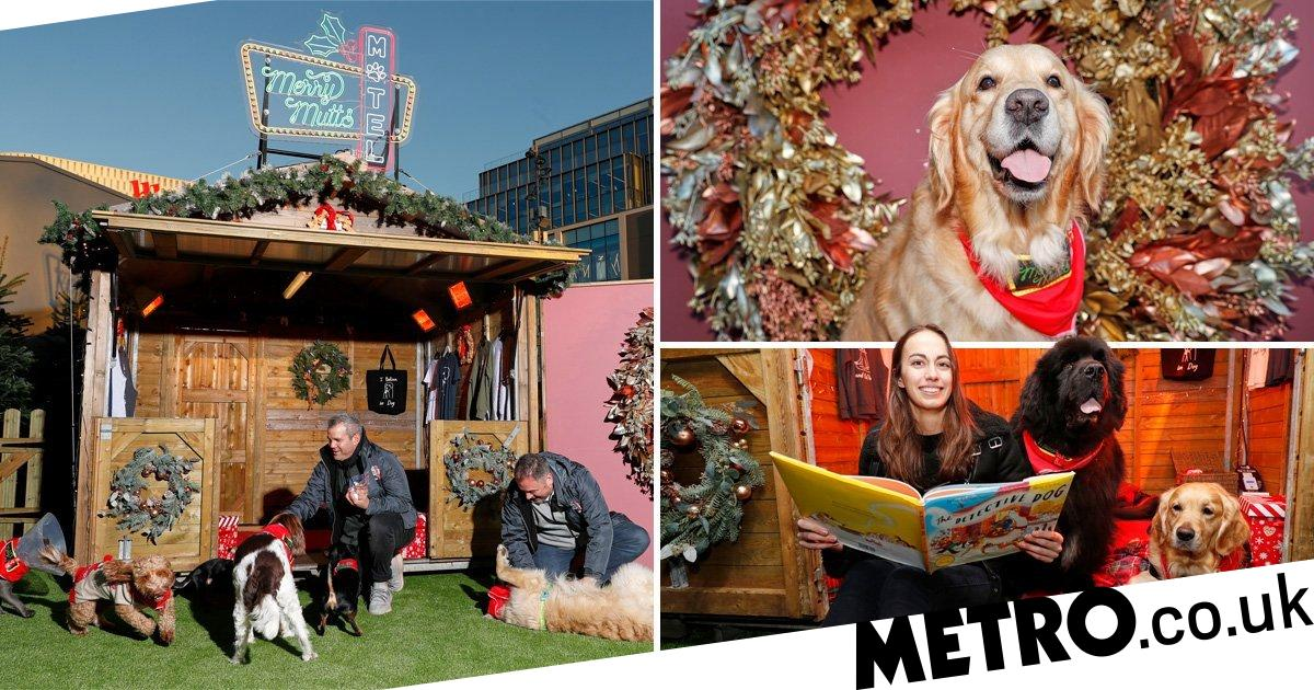 Westfield will look after your dog while you do your Christmas shopping