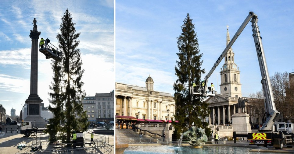 Visitors have been commenting on the Trafalgar Square Christmas Tree's looks (Picture: Rex)