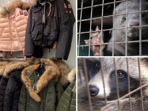 House of Fraser still selling fur despite pulling coats from shelves after protests