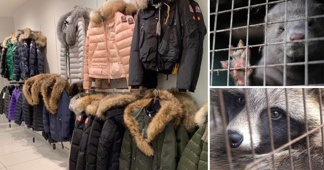 Coats in House of Fraser and caged animals in fur farm