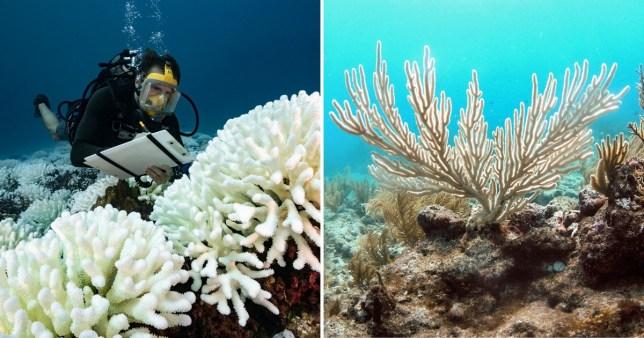 Ocean's running out of oxygen