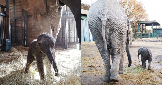 Animal park gets first African elephant born in the UK this year and he's a cutie